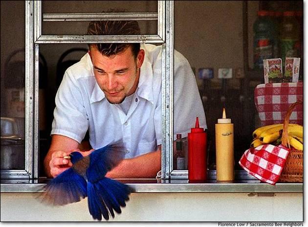 Alimentando colibries