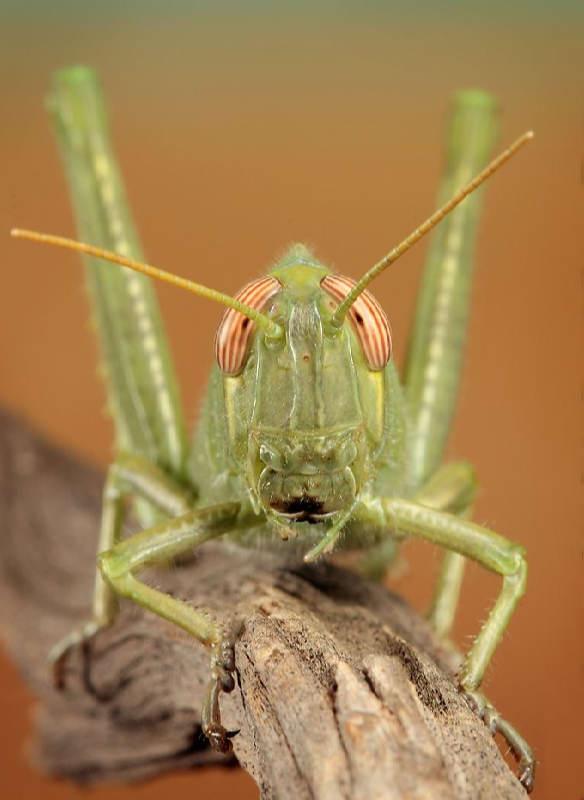 Insectos sorprendentes 01