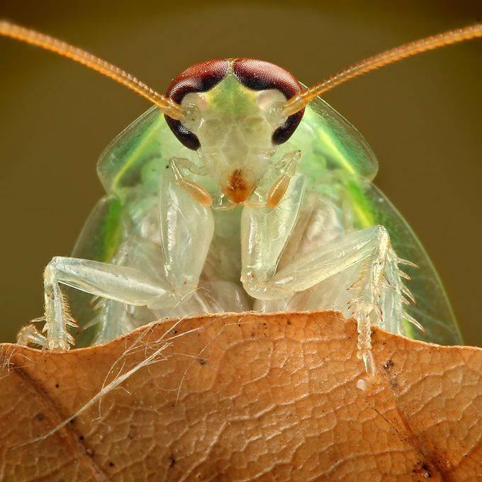Insectos sorprendentes 03
