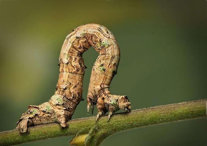Insectos sorprendentes 04