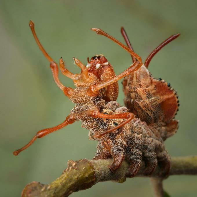 Insectos sorprendentes 05