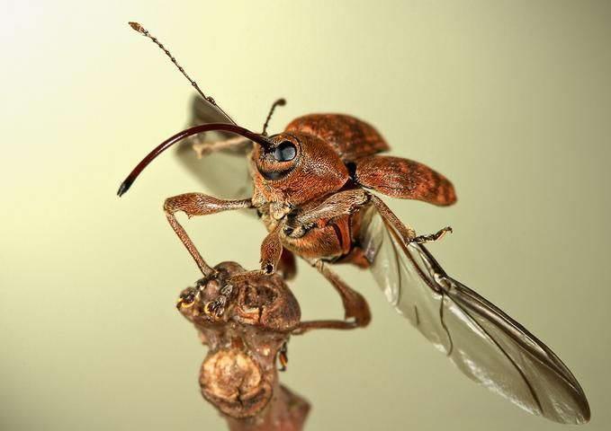 Insectos sorprendentes 07