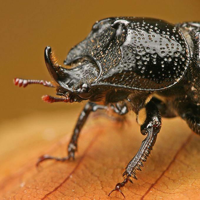 Insectos sorprendentes 09