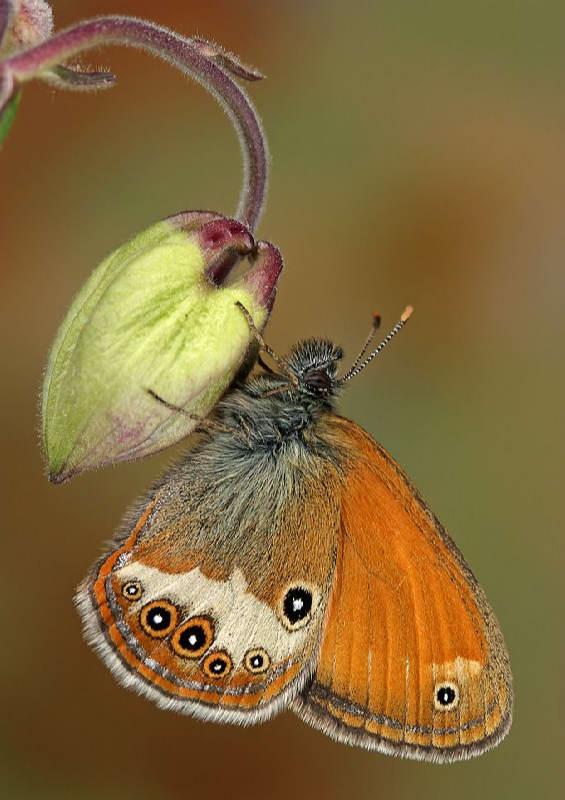 Insectos sorprendentes 10