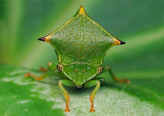 Insectos sorprendentes 11
