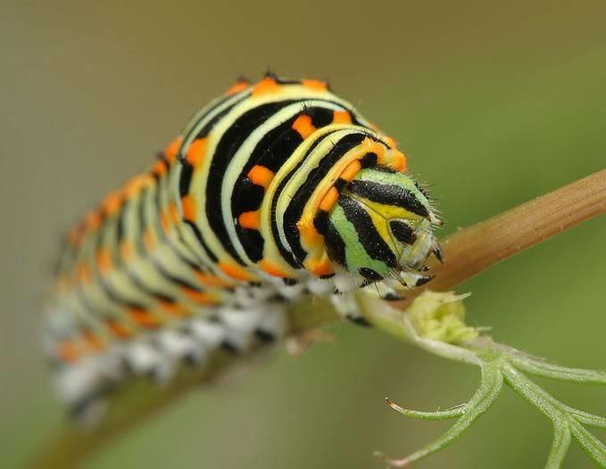 Insectos sorprendentes 12