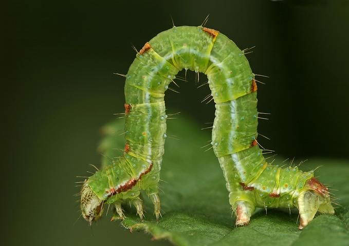 Insectos sorprendentes 13