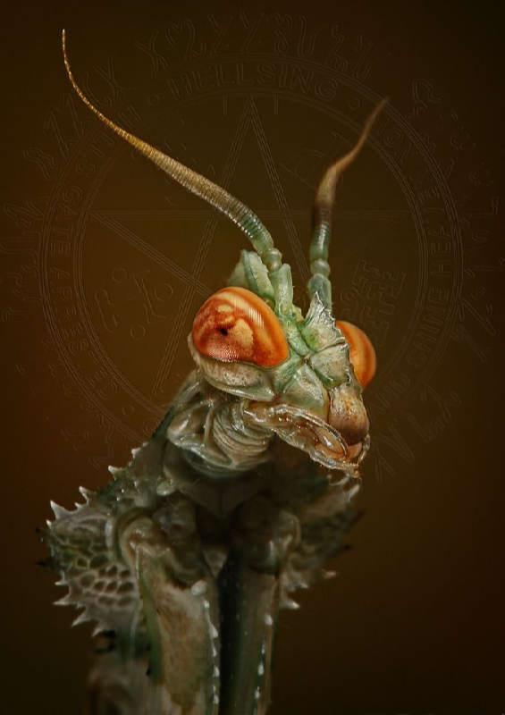 Insectos sorprendentes 14