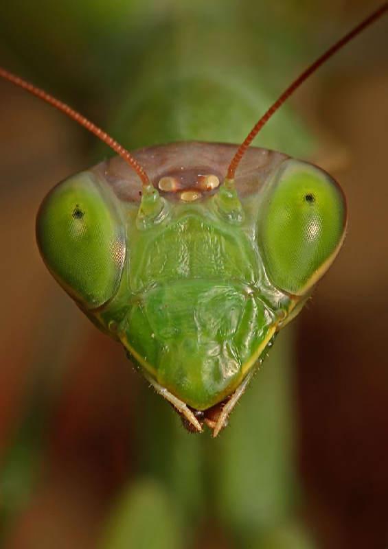 Insectos sorprendentes 15