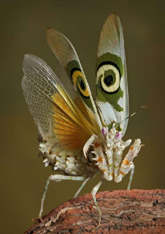Insectos sorprendentes 16
