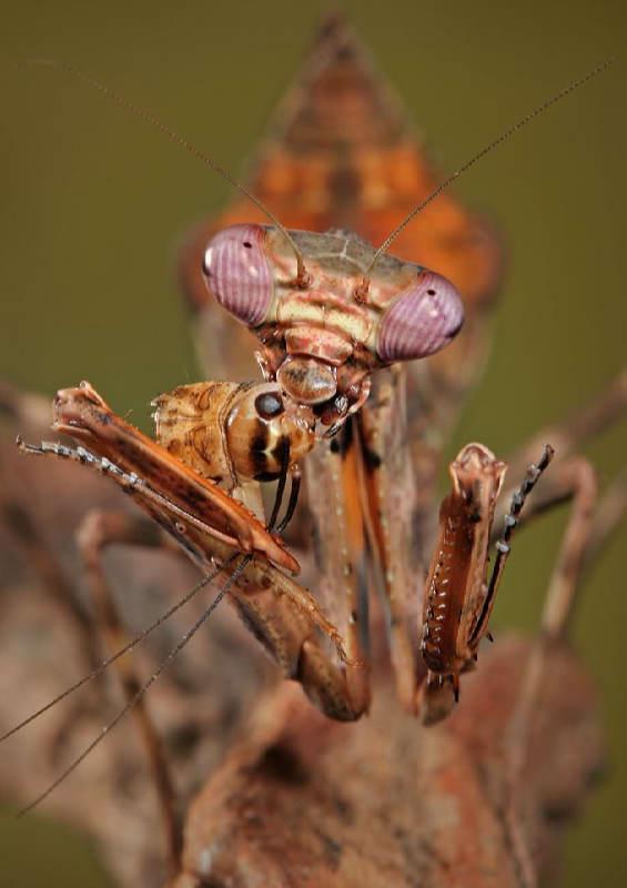 Insectos sorprendentes 17