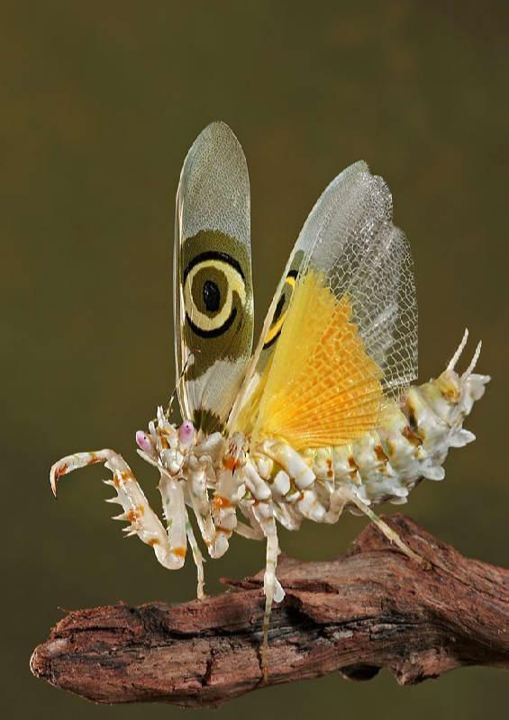 Insectos sorprendentes 19