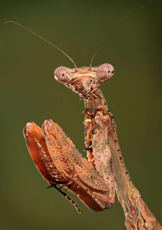 Insectos sorprendentes 20