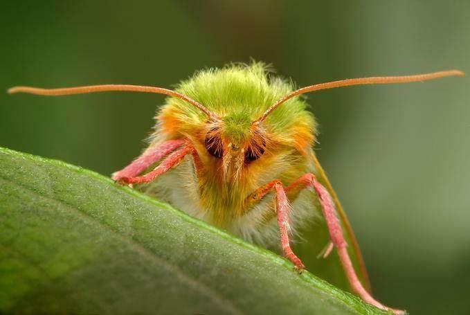 Insectos sorprendentes 23