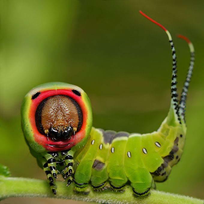 Insectos sorprendentes 24