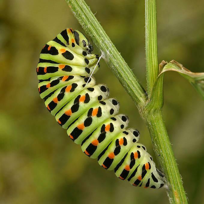 Insectos sorprendentes 26