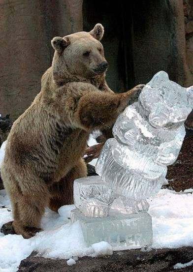 Oso de hielo