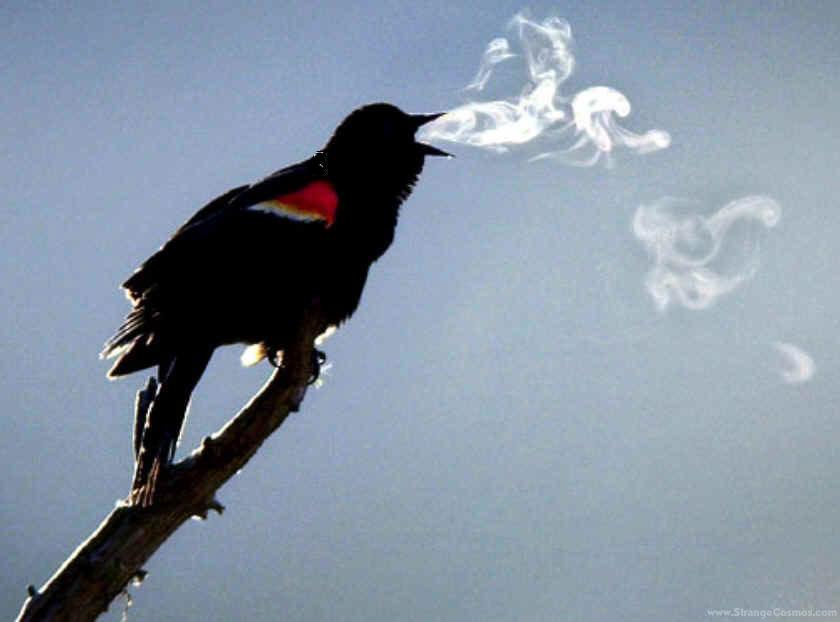 Pajaro fumador