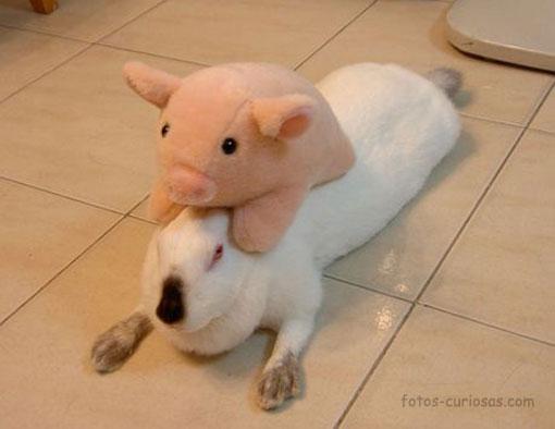 Conejo y cerdito
