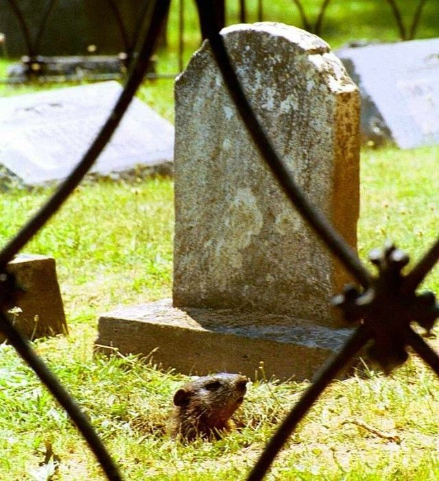 Ladron de tumbas