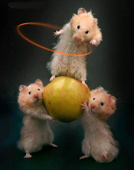 Ratones equilibristas