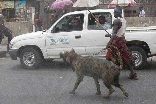 paseando hiena