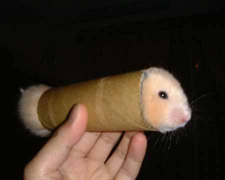 hot-hamster