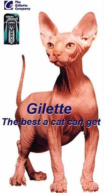 Gato Gilette