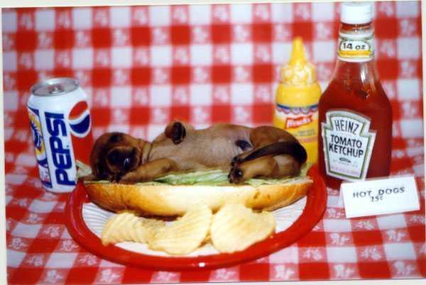 add hotdog