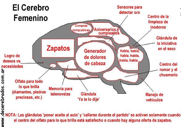 Cerebro de mujer