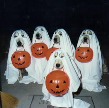 Perros de Halloween