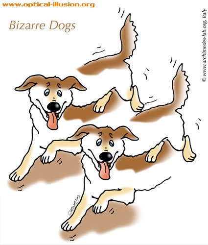 Bizarre Dogs! Something terrible must have happened :) (The image is Copyright Archimedes-Lab)
