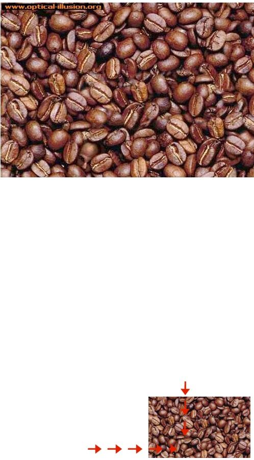 Can you find the face amoung the coffee beans?