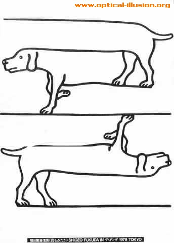 Which leg belongs to which dog?