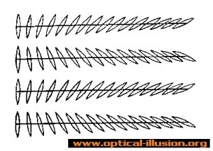 The lines are parallel to each other.