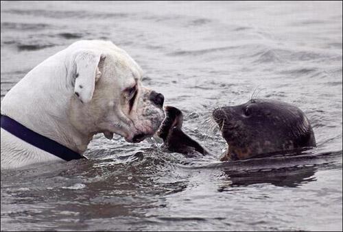 tierno-perro-foca-1