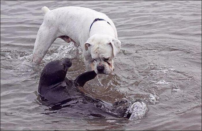 tierno-perro-foca-2