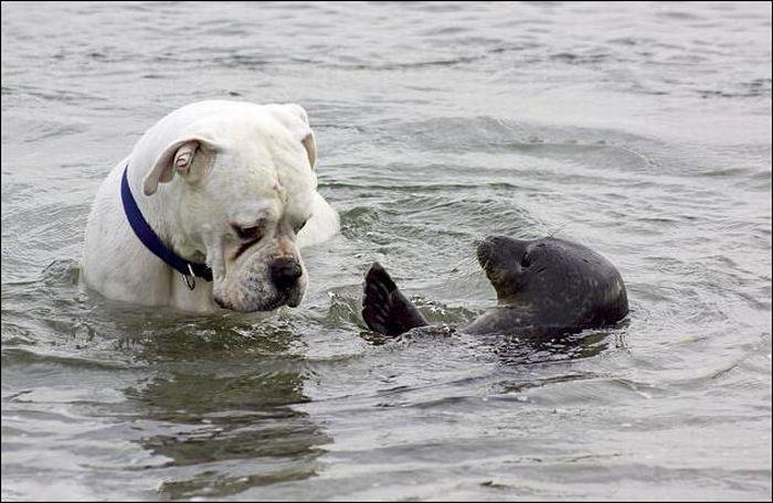 tierno-perro-foca-6