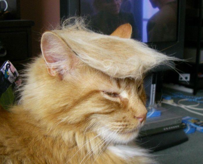 gato-fashion