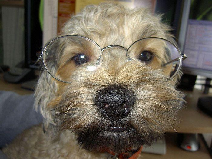 perro-ejecutivo
