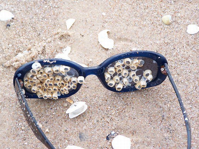 gafas-con-caracoles