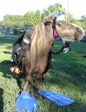 pobre-caballo