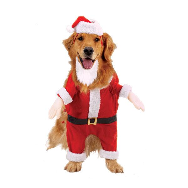Papa-Noel perruno