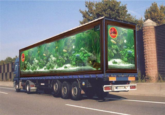 Camiones pintados 2