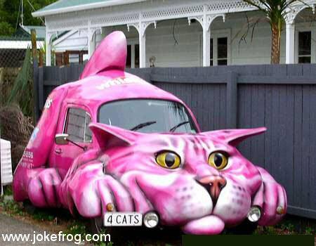 carro-gato