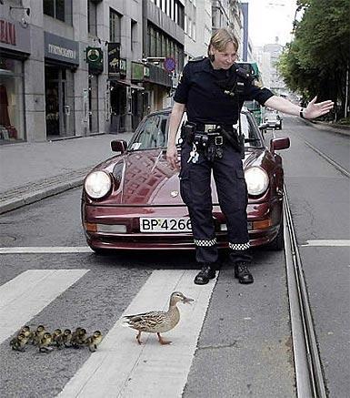 Paso de patos