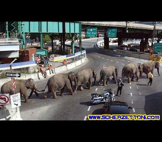 passaggio elefante